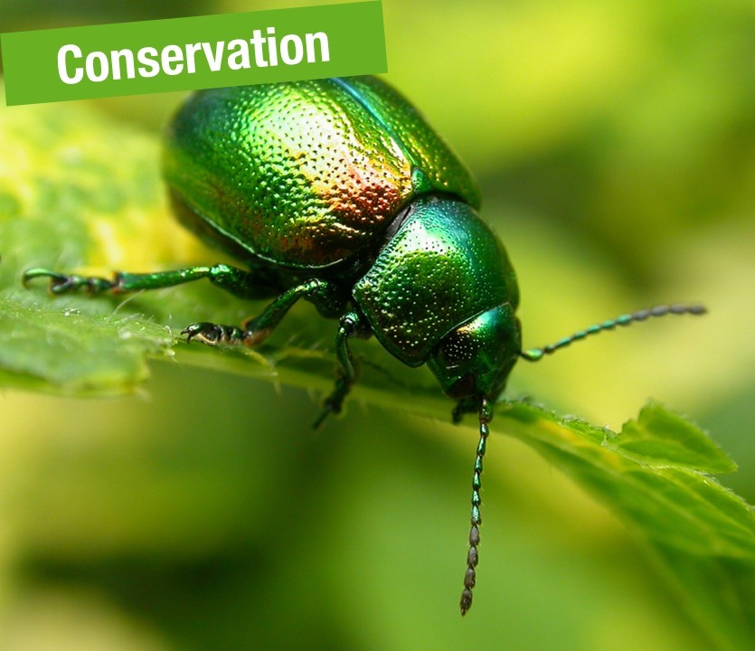 Conservation, Wildlife and Animal Welfare