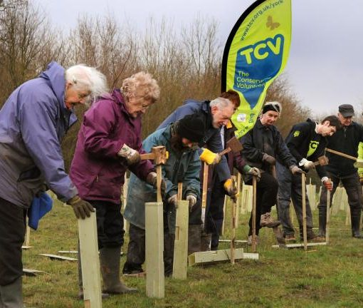 tree planting in Rawcliffe